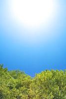 新緑のブナと太陽