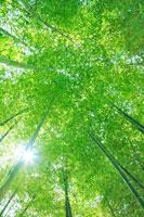 新緑の竹林と木もれ日