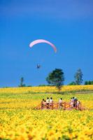 ヒマワリ畑とパラグライダーと観客