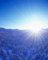 冬の樹林と朝日と西クマネシリ岳
