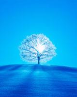 霧氷の木立と木もれ日