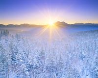 朝の樹氷(西クマネシリ岳)