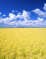 秋の田園と弥彦山 22320015411| 写真素材・ストックフォト・画像・イラスト素材|アマナイメージズ