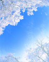 樹氷 22320015538| 写真素材・ストックフォト・画像・イラスト素材|アマナイメージズ