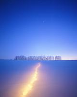 カラマツ並木とキタキツネの足跡