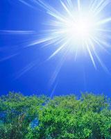 新緑のブナ林と太陽