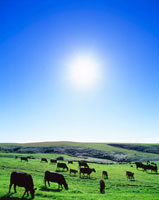 黒毛和牛と太陽
