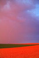 小麦畑と木立に落ちる雷夕景
