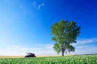 ジャガイモ畑と哲学の木とトラクター