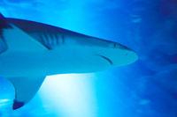 サメと光芒