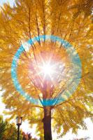イチョウの黄葉と木漏れ日