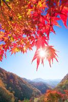 紅葉のモミジと萱野高原の山並み
