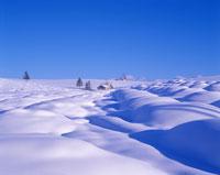 雪原と木立と民家
