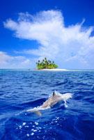 イルカとジープ島