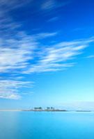 ヤシの木と流れる雲