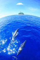 イルカのペアとジープ島