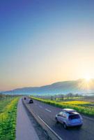 走る自動車と菜の花畑と朝日