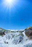 白馬連峰と松川の清流とペアの鳥
