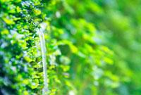 苔から出る清水