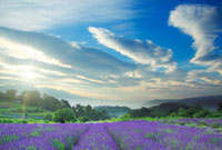 ラベンダー畑と浅間山と朝日 22320027940| 写真素材・ストックフォト・画像・イラスト素材|アマナイメージズ