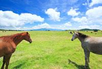 馬のペアと牧草地