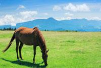 馬と蓼科山