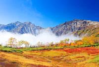 紅葉と白馬岳と白馬三山 22320028951| 写真素材・ストックフォト・画像・イラスト素材|アマナイメージズ