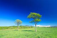 牧草地の草原と木立と八甲田山