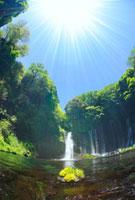 水草の生えた岩と新緑の白糸の滝と太陽の光芒