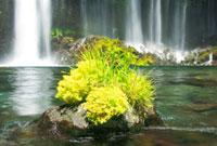 水草の生えた岩と白糸の滝