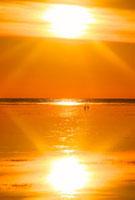 水鏡の海と朝日とアオサギのペア