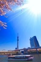ソメイヨシノと東京スカイツリーと遊覧船 22320033134| 写真素材・ストックフォト・画像・イラスト素材|アマナイメージズ