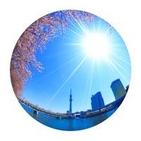 ソメイヨシノと東京スカイツリーと東武伊勢崎線の電車,魚眼 22320033137| 写真素材・ストックフォト・画像・イラスト素材|アマナイメージズ