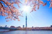 ソメイヨシノと東京スカイツリーと言問橋 22320033139| 写真素材・ストックフォト・画像・イラスト素材|アマナイメージズ
