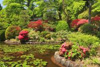 大輪寺のツツジと庭園