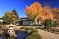 上田市立博物館と紅葉のイチョウと日本庭園