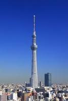 東京スカイツリー 22320039748| 写真素材・ストックフォト・画像・イラスト素材|アマナイメージズ