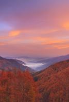 朝焼けの分杭峠から望む高遠方向の山並みと紅葉のカラマツ林