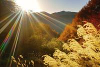 ゼロ磁場の水場付近から望む分杭峠の紅葉の樹林とススキと夕日 22320040715| 写真素材・ストックフォト・画像・イラスト素材|アマナイメージズ