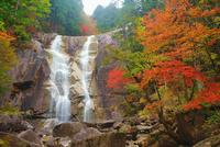 紅葉の田立の滝の天河滝 22320040760| 写真素材・ストックフォト・画像・イラスト素材|アマナイメージズ