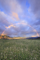 花咲く蕎麦畑と夫神岳などの里山と朝のダブルレインボー 22320040850| 写真素材・ストックフォト・画像・イラスト素材|アマナイメージズ