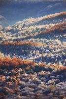 朝の小浅間山から望む湯川源流部の霧氷のカラマツ樹海