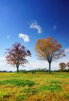 大湯環状列石の紅葉の木立 22320040982| 写真素材・ストックフォト・画像・イラスト素材|アマナイメージズ