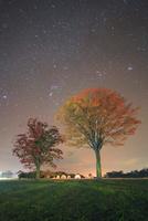 大湯環状列石の紅葉の木立と星空 22320041157  写真素材・ストックフォト・画像・イラスト素材 アマナイメージズ