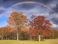 大湯環状列石の紅葉の樹林と虹 22320041161| 写真素材・ストックフォト・画像・イラスト素材|アマナイメージズ