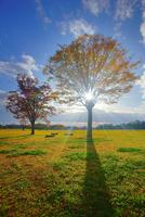 大湯環状列石の紅葉の木立と夕方の木もれ日 22320041162| 写真素材・ストックフォト・画像・イラスト素材|アマナイメージズ