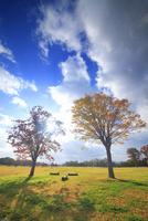 大湯環状列石の紅葉の木立と夕方の木もれ日 22320041163| 写真素材・ストックフォト・画像・イラスト素材|アマナイメージズ