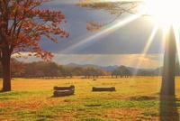 大湯環状列石の紅葉の木立と夕日の木もれ日 22320041168| 写真素材・ストックフォト・画像・イラスト素材|アマナイメージズ