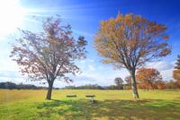 大湯環状列石の紅葉の木立と太陽の光芒 22320041171  写真素材・ストックフォト・画像・イラスト素材 アマナイメージズ