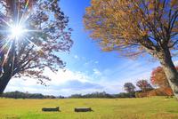大湯環状列石の紅葉の木立と太陽の光芒 22320041173  写真素材・ストックフォト・画像・イラスト素材 アマナイメージズ